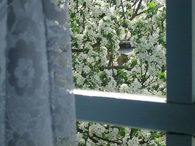 Яблоня за окном
