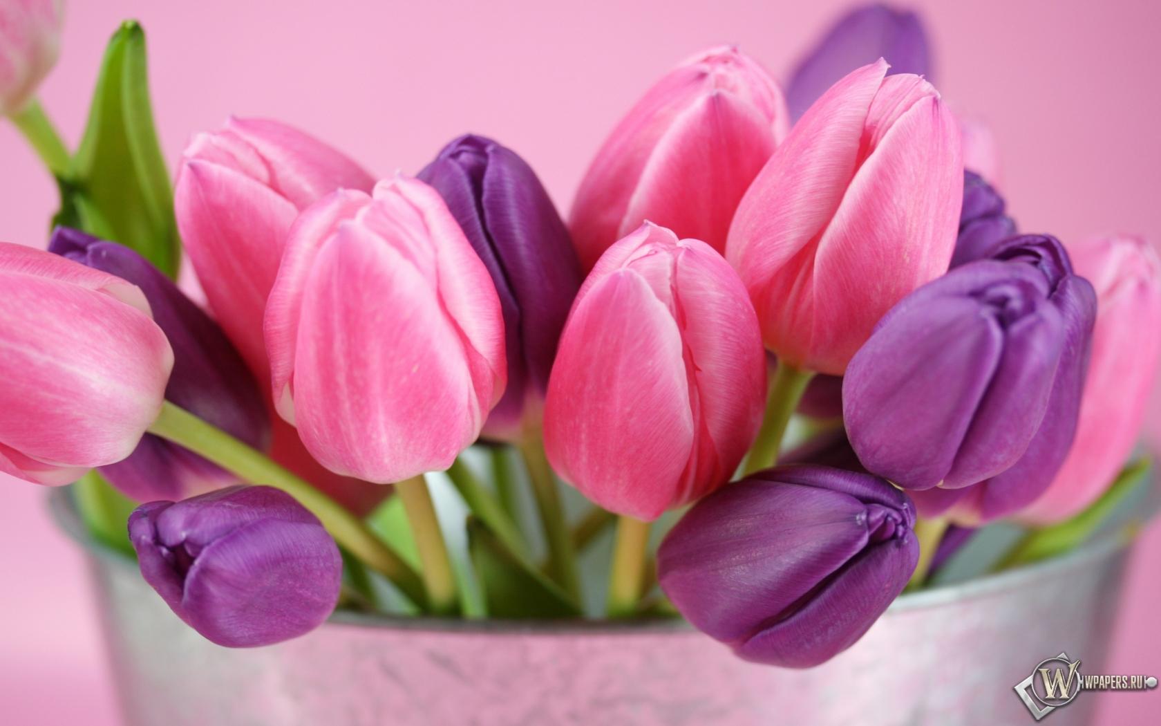 Тюльпаны 1680x1050