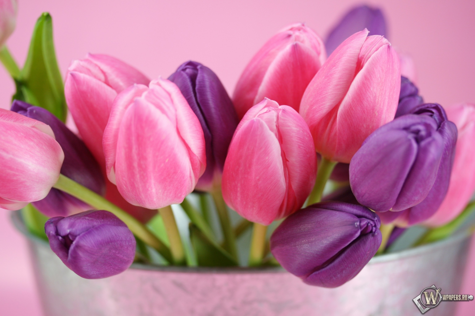 Тюльпаны 1920x1280