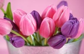 Обои Тюльпаны: Цветы, Тюльпаны, Цветы