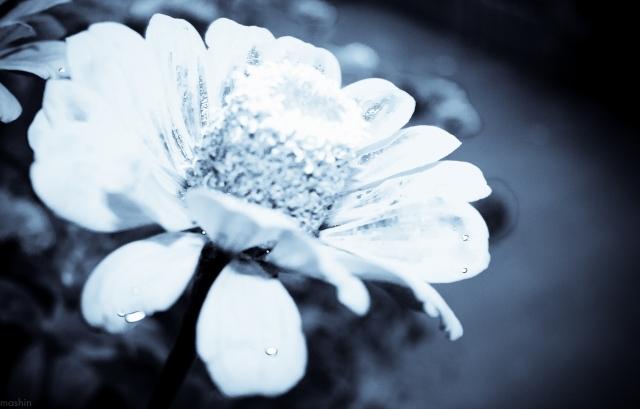Цветок после дождя