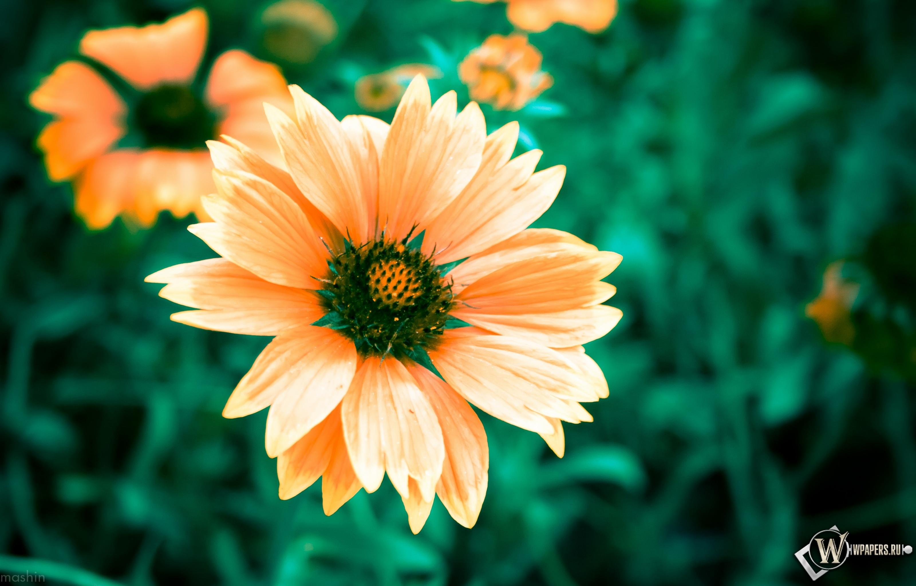 Теплый цветок 3200x2048