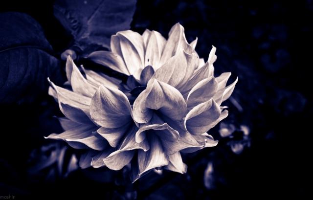 Готический цветок