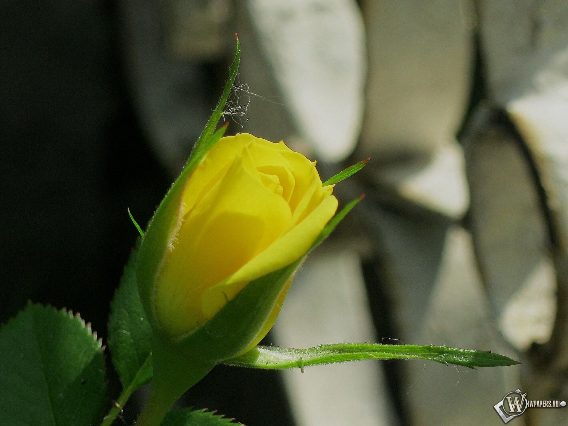 Бутон розы 1920x1440