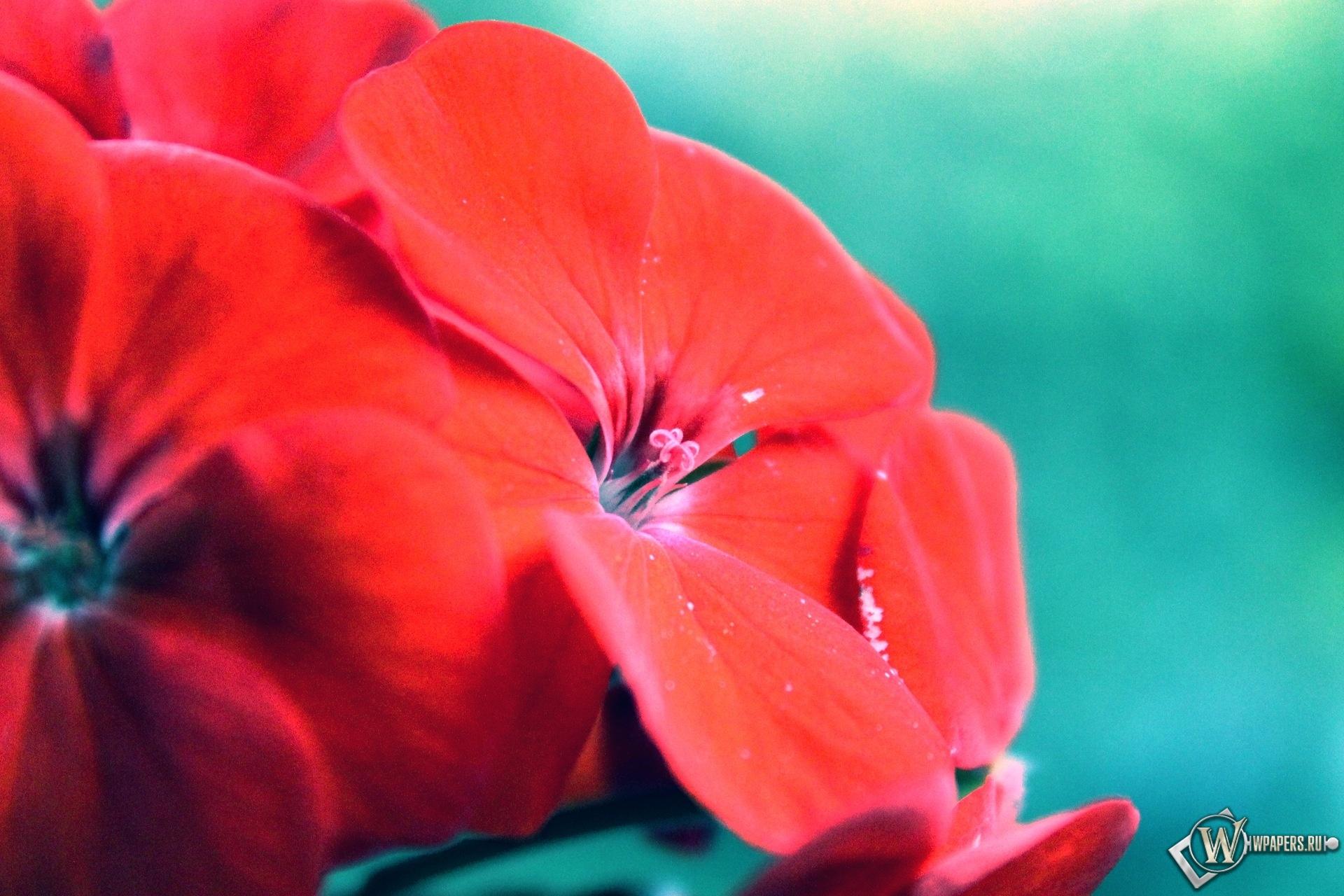 Яркие цветы 1920x1280