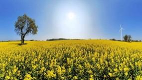 Обои Цветочное поле: Цветочки, Поле, Дерево, Ветряки, Цветы
