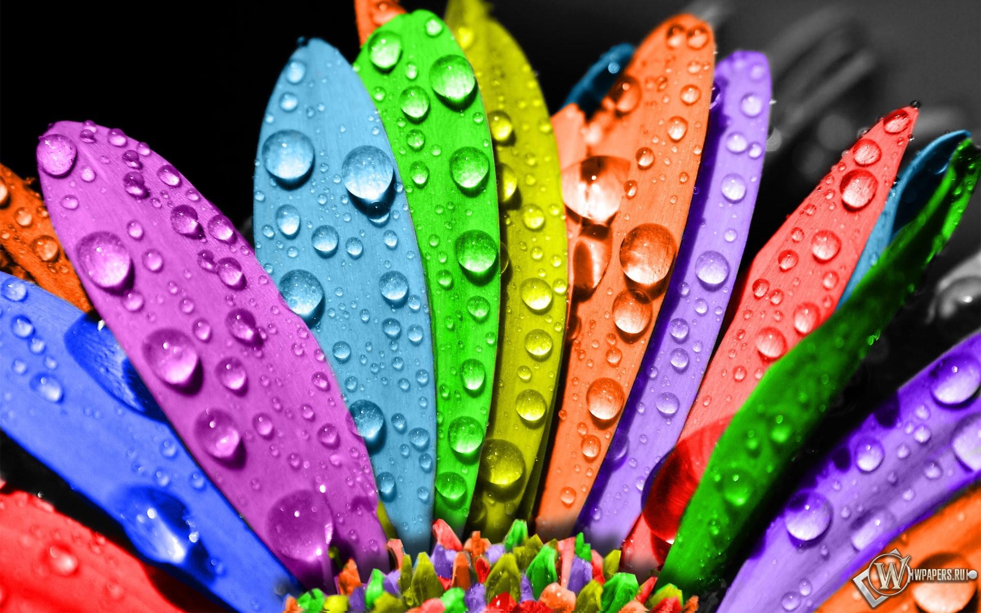 Разноцветный цветок 1920x1200