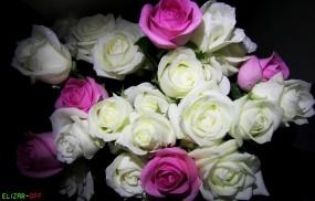 Обои Букет Роз: Цветы, Розы, Букет, Rose, Цветы