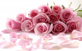 Обои Розовые розы: Розы, Розовый, Букет, Цветы