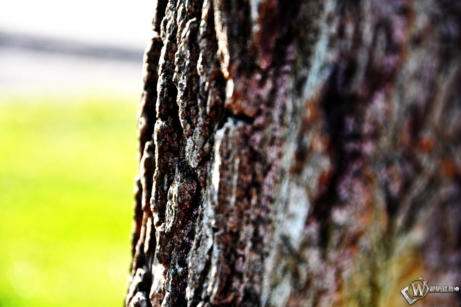 Кора дерева 1920x1280