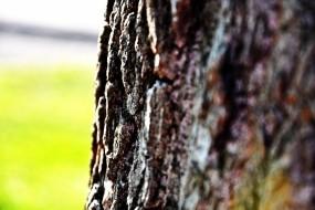 Обои Кора дерева: Дерево, Кора, Деревья