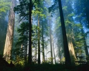 Обои Лес: Свет, Лес, Лето, Деревья