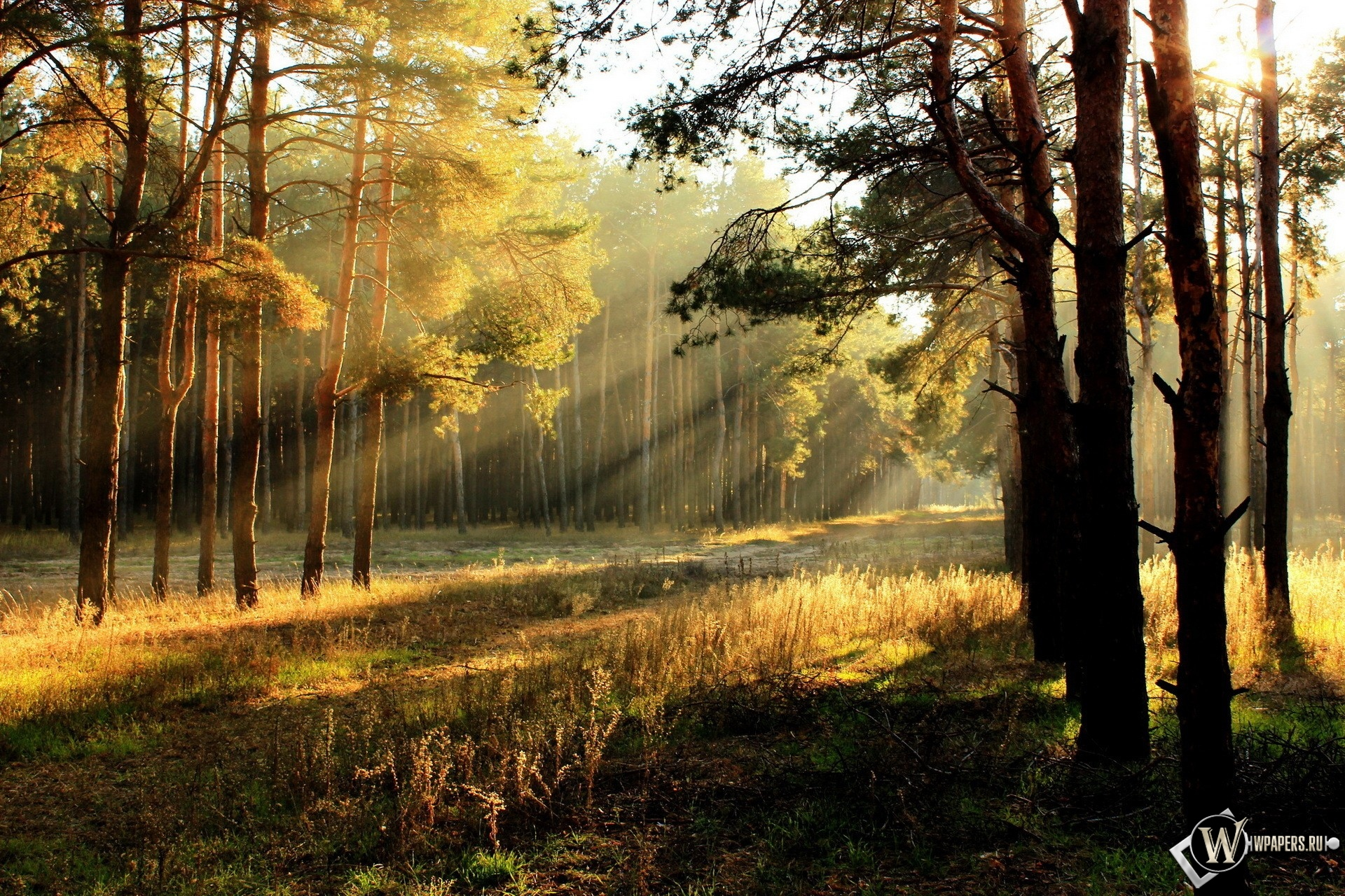 Утренний лес 1920x1280