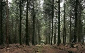 Обои Русский лес: Лес, Деревья, Деревья