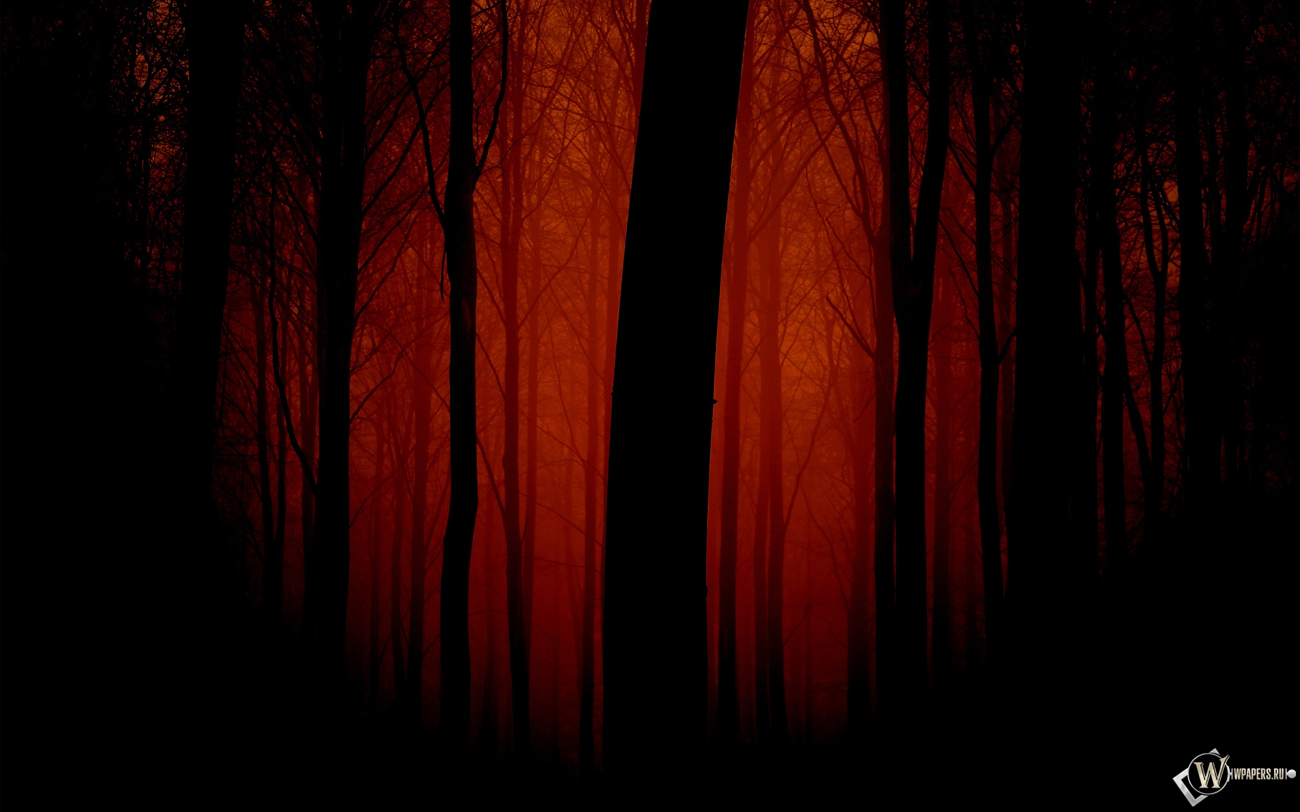 Мрачный лес 2560x1600