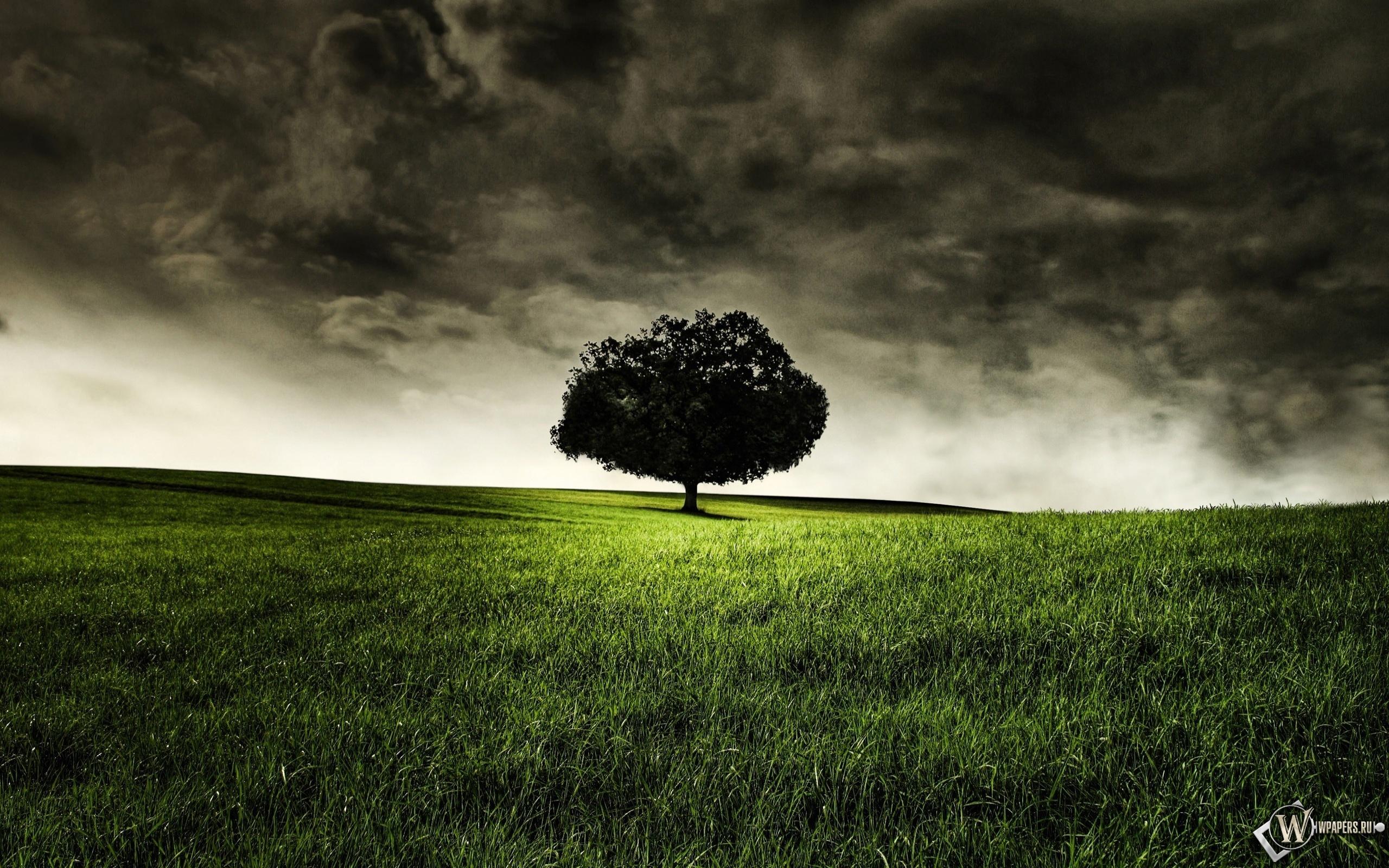 Одинокое дерево 2560x1600
