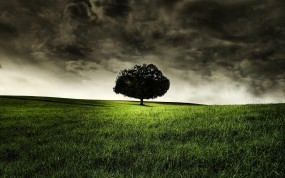 Обои Одинокое дерево: Дерево, Трава, Одиночество, Деревья