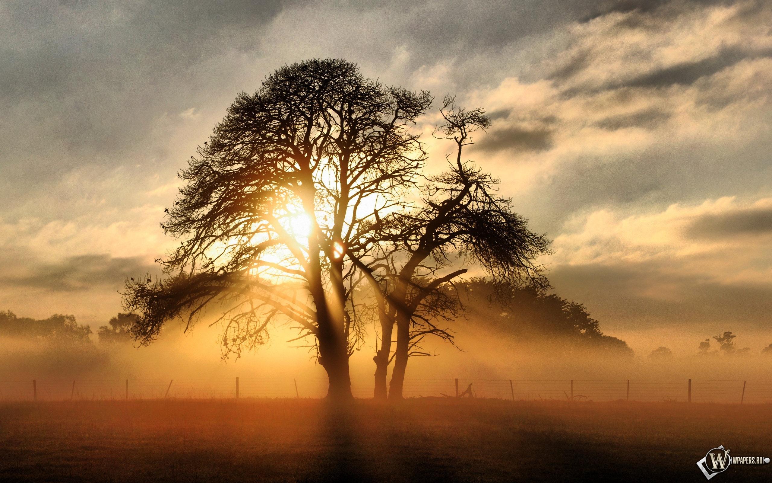Солнце за деревом 2560x1600