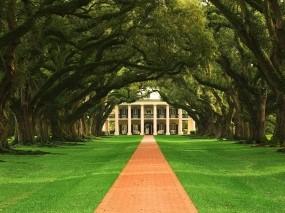 Обои Дубовая аллея в Луизиане: Деревья, Дом, Деревья