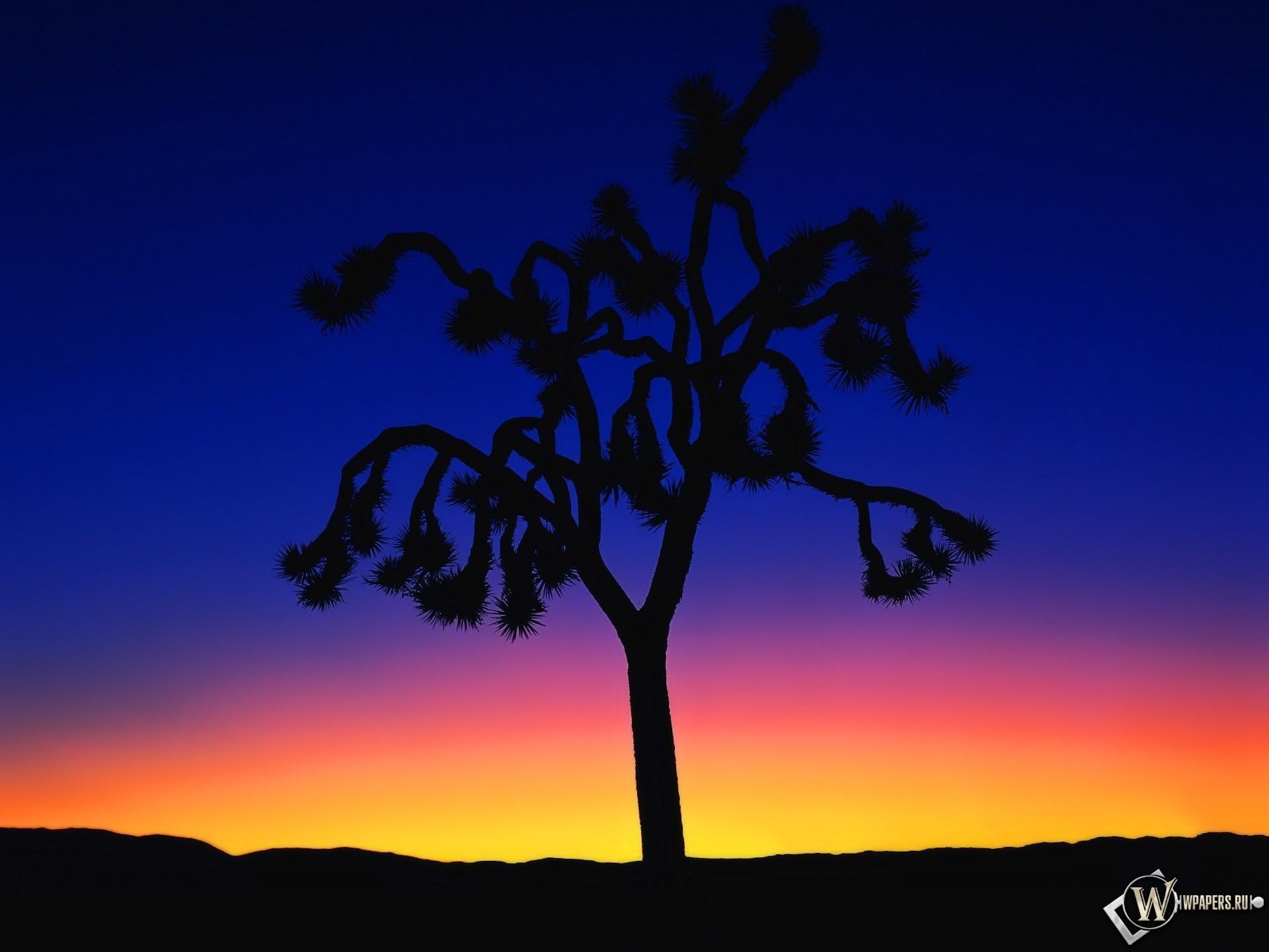 Контрастное дерево 1920x1440