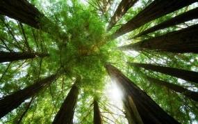 Обои Лес изнутри: Лес, Деревья, Природа, Деревья