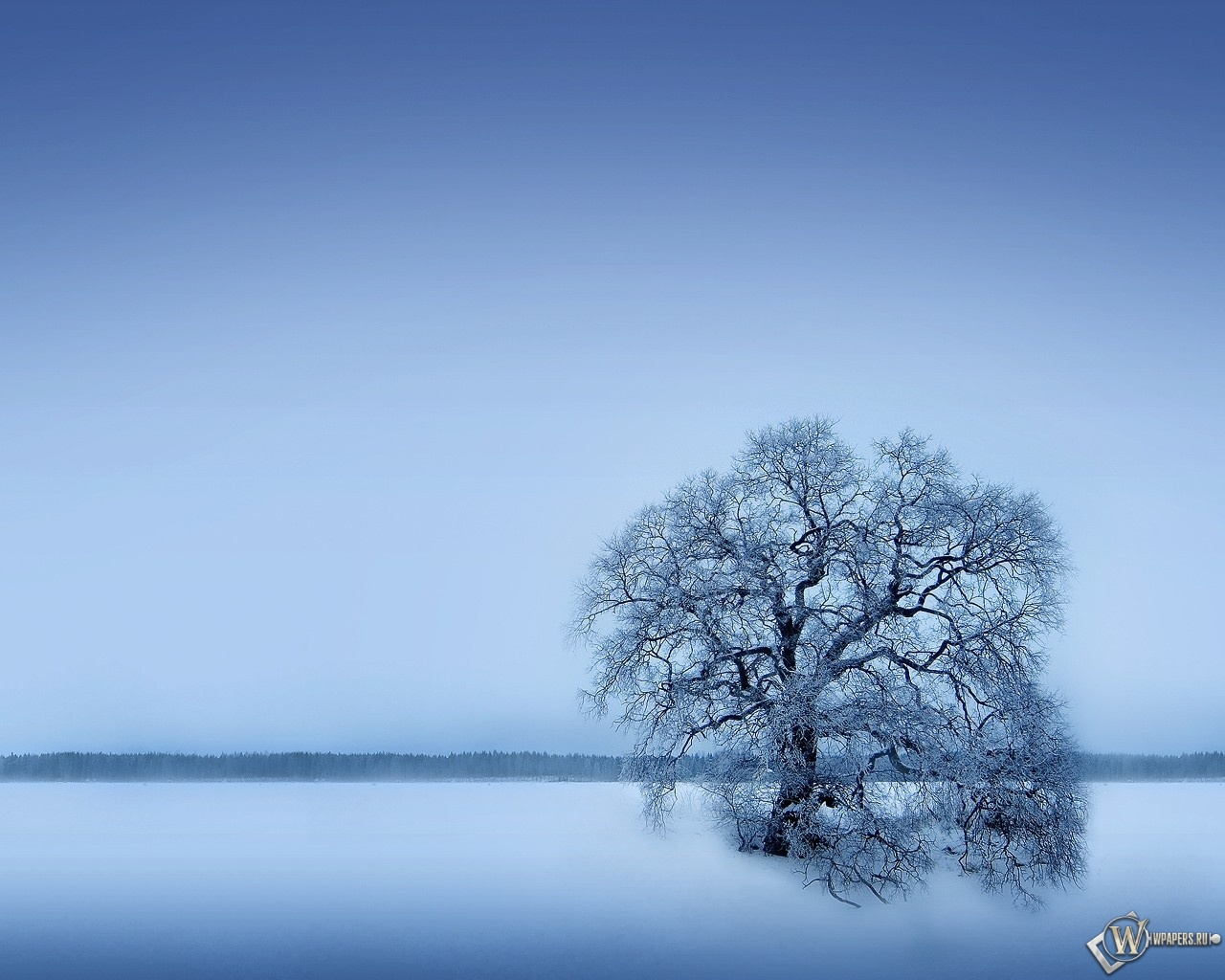 Одинокое дерево 1280x1024