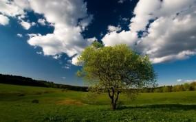 Обои Дерево на фоне облаков: Облака, Лес, Поле, Дерево, Небо, Деревья