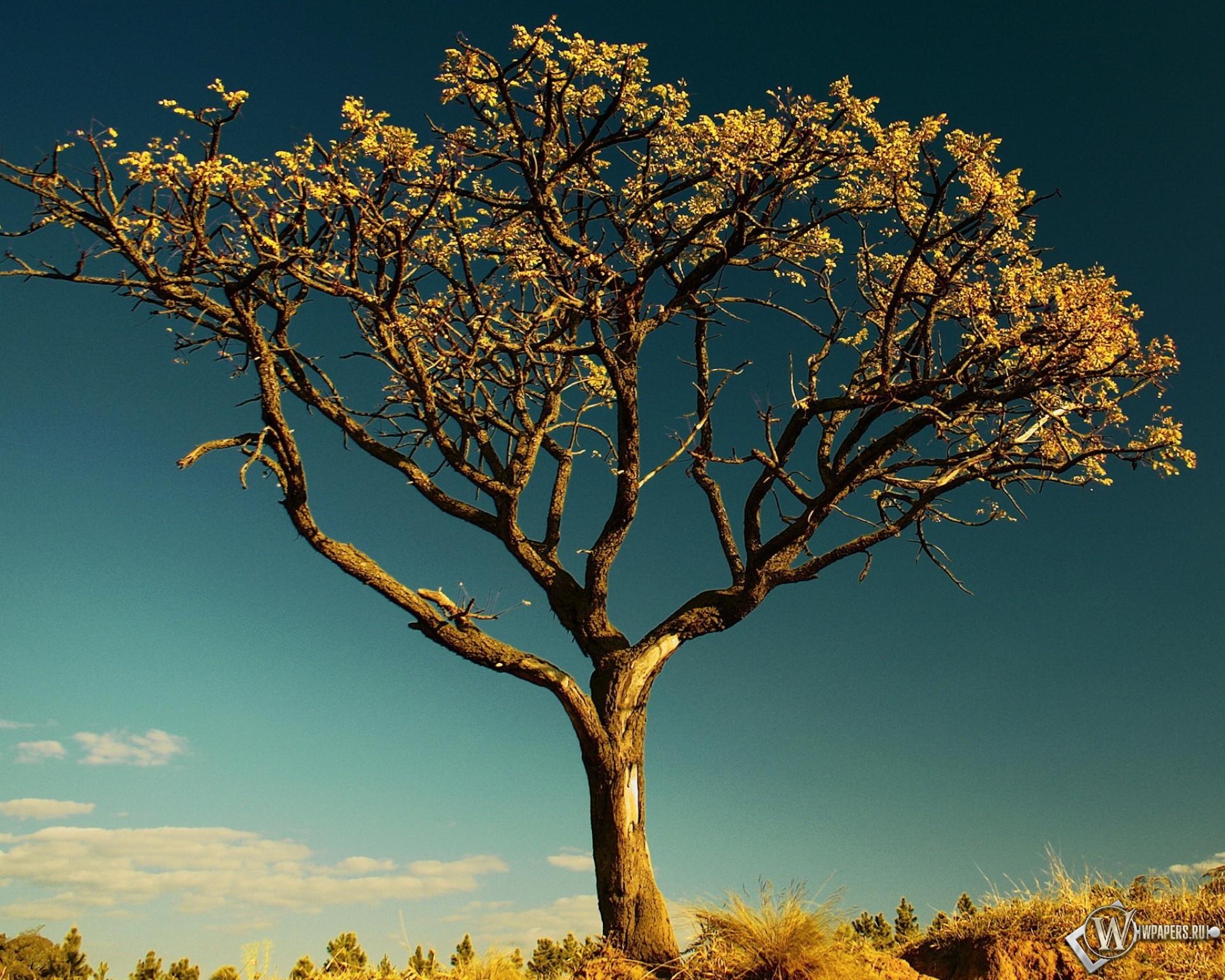 Красивые картинки на дерево