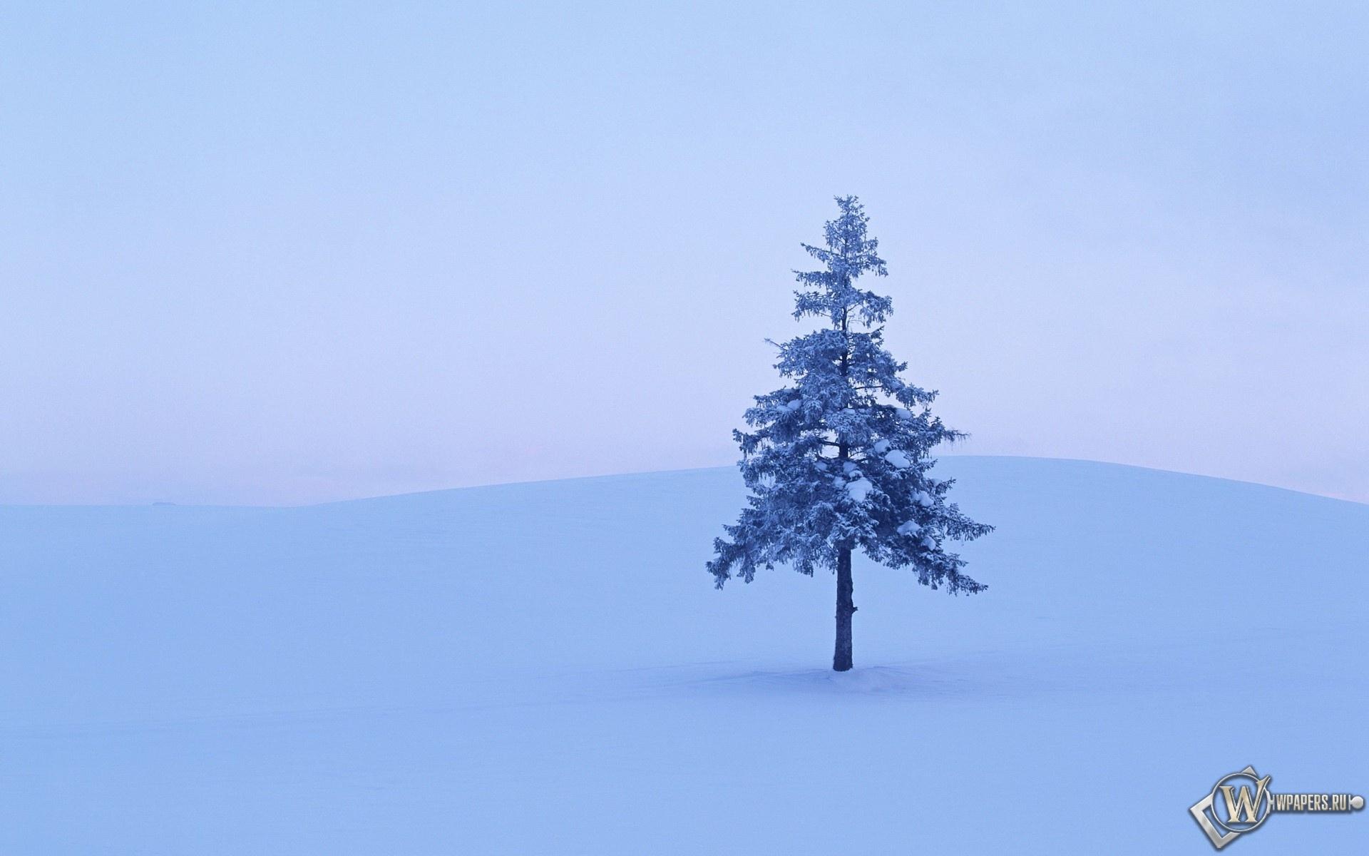 Дерево в снегу 1920x1200