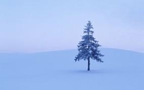 Обои Дерево в снегу: Зима, Снег, Дерево, Деревья