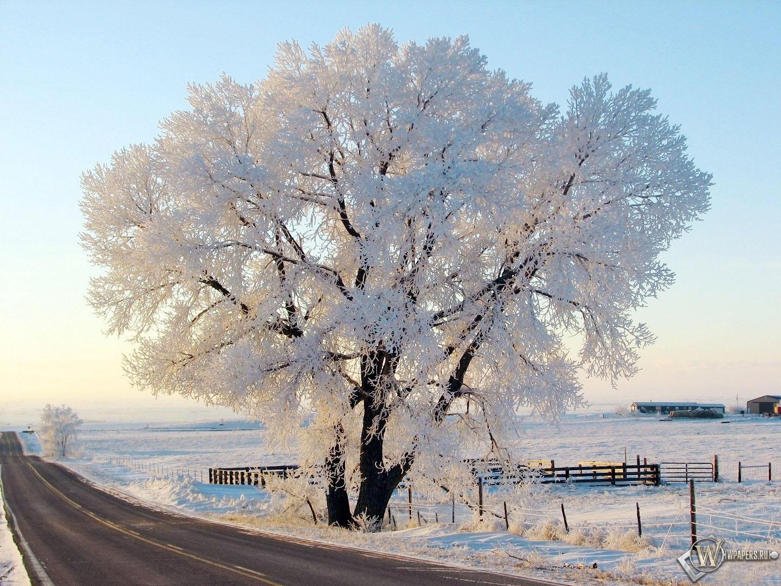 Дерево в снегу 1600x1200