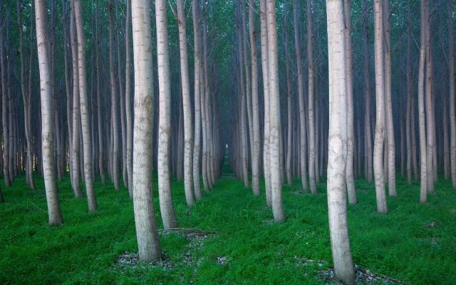 Вертикальные деревья