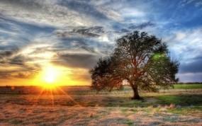 Обои Дерево на закате: Солнце, Закат, Поле, Дерево, Деревья