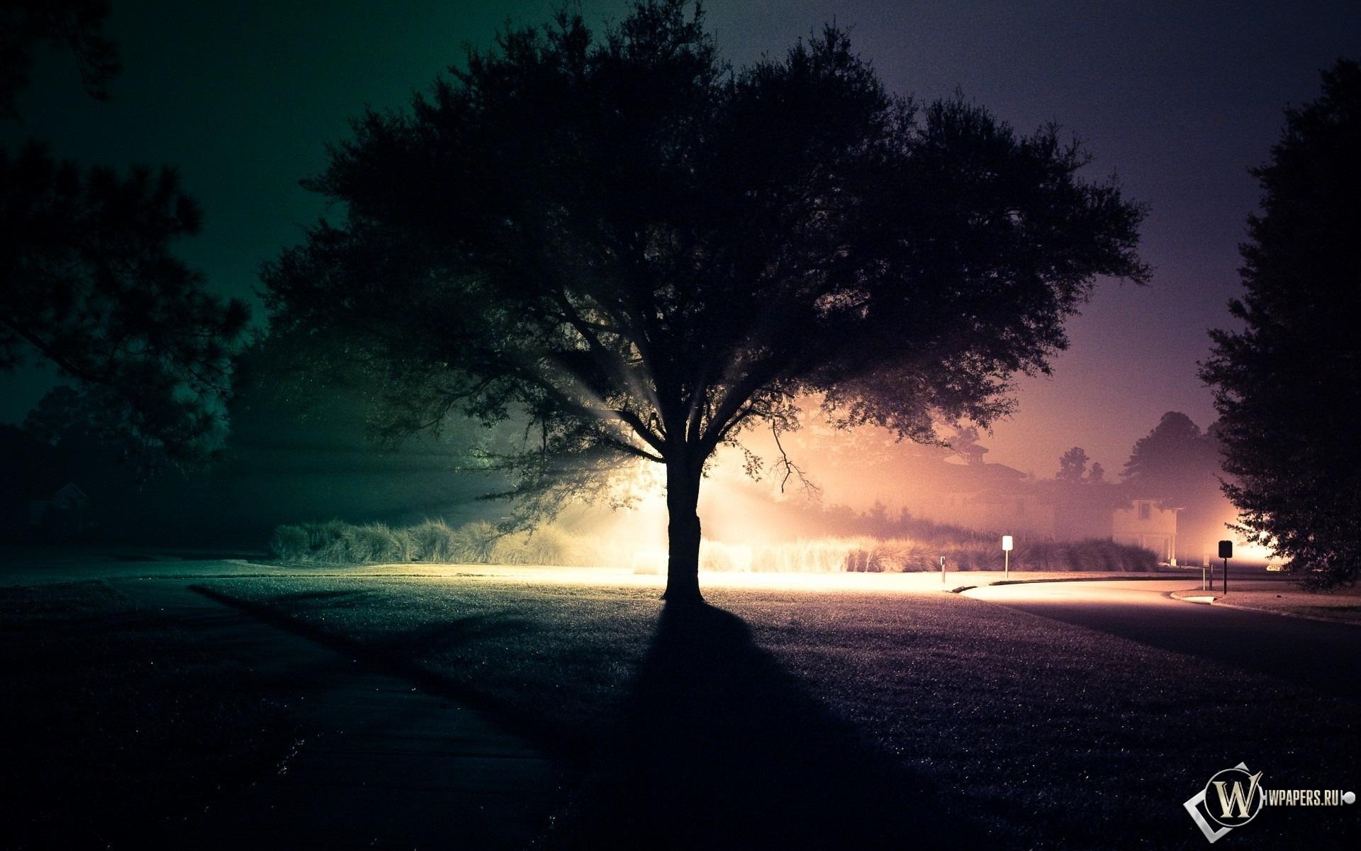 Ночное дерево 1920x1200