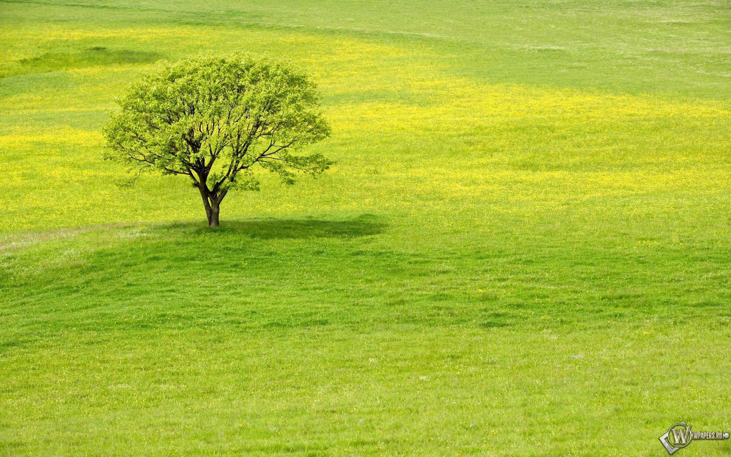 Meadow tree 2560x1600