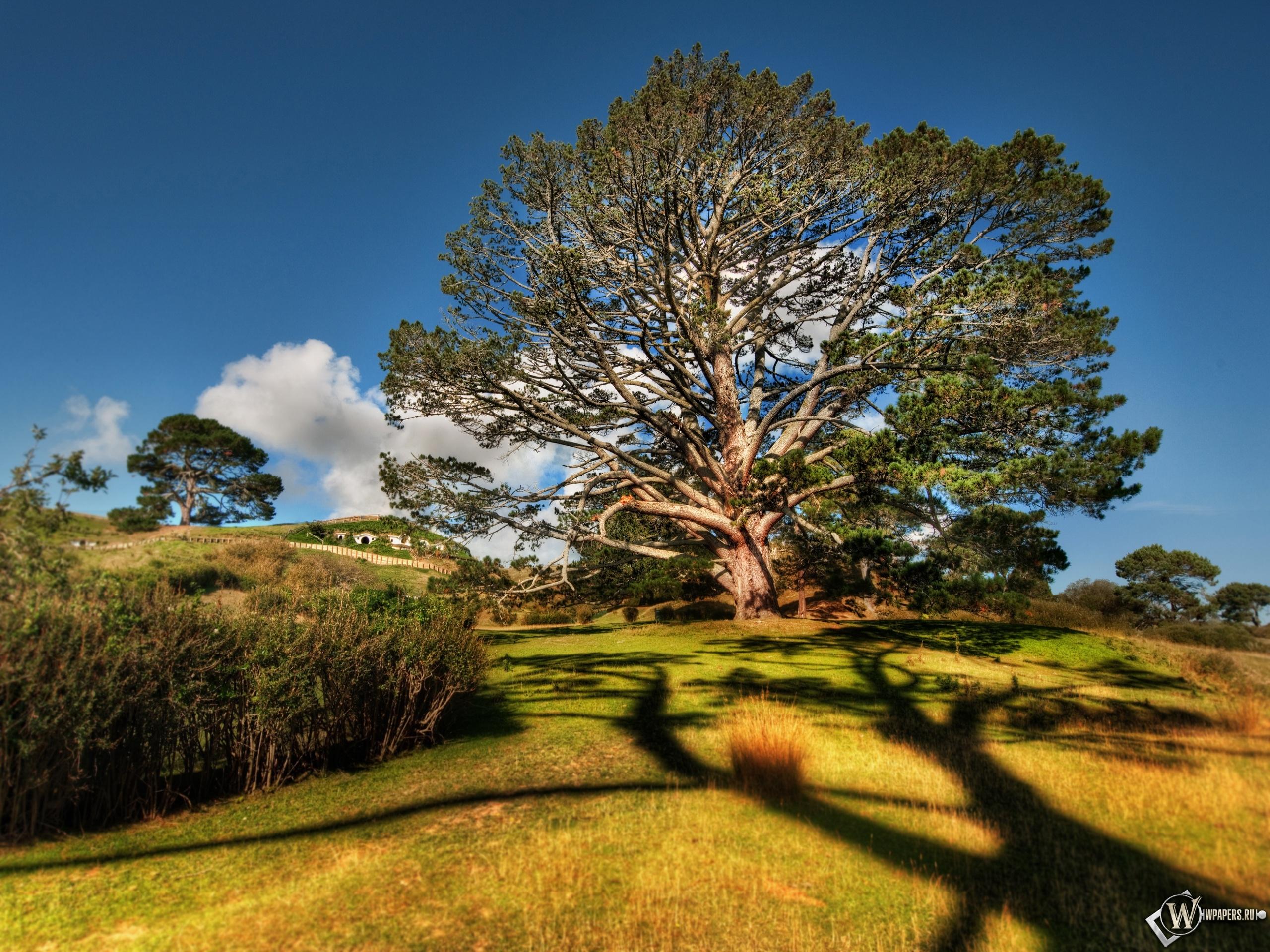 Вековое дерево 2560x1920