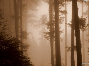 Обои Туман в лесу: Лес, Лес в тумане, Деревья
