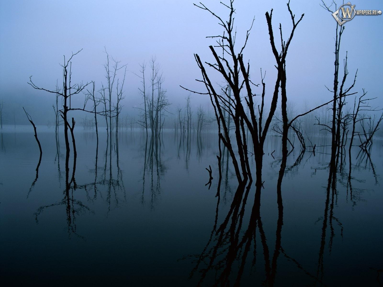 Деревья в воде 1600x1200