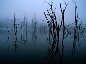 Обои Деревья в воде: Вода, Деревья, Деревья