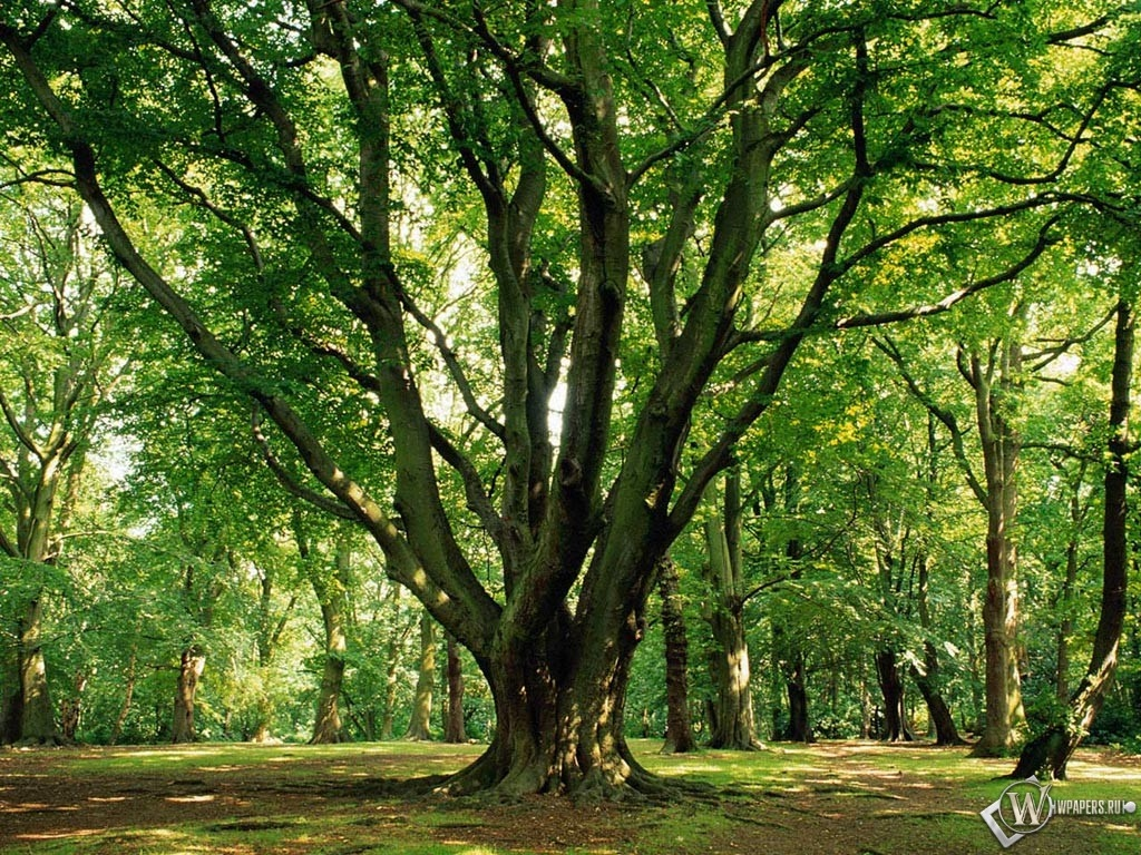 Весенний лес 1024x768