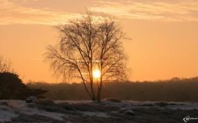 Обои Зимний рассвет: Зима, Солнце, Дерево, Берёза, Деревья