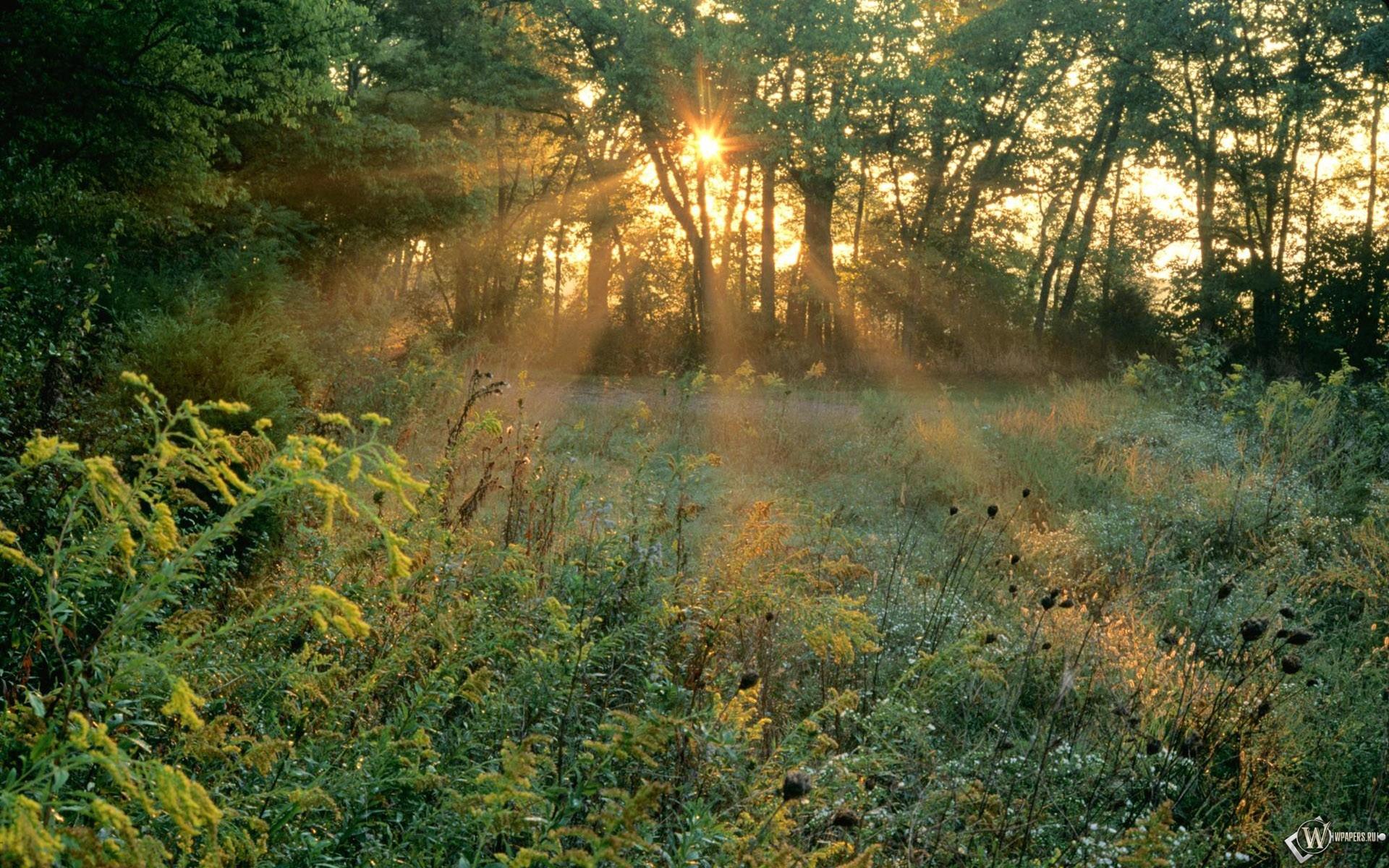 Лучи солнца в лесу 1920x1200