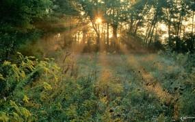 Обои Лучи солнца в лесу: , Деревья