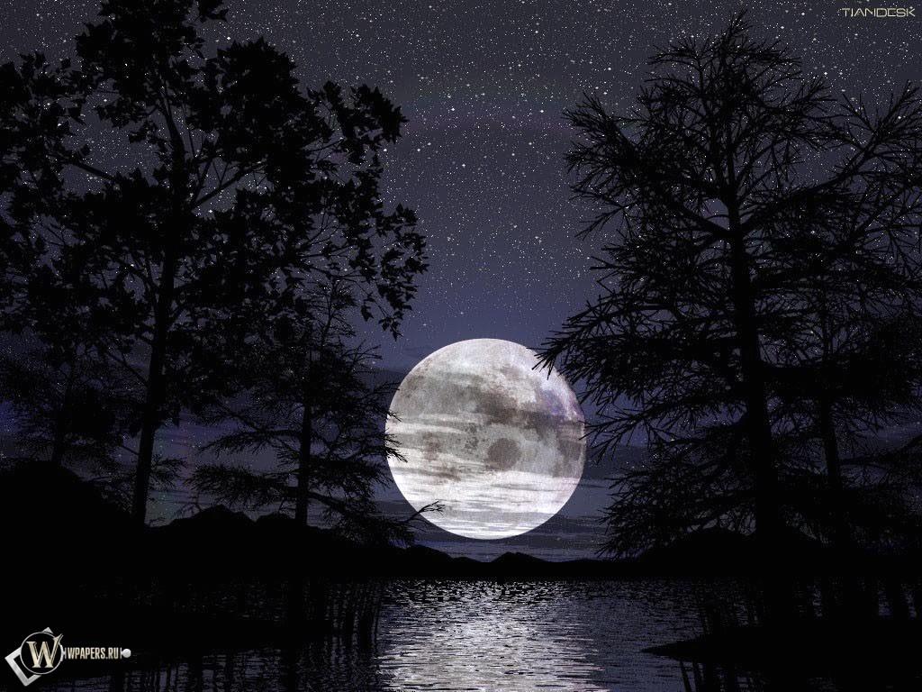 Луна за деревьями 1024x768