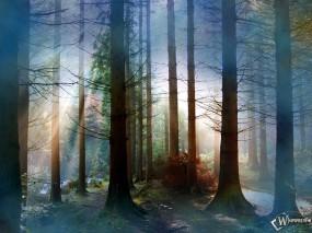 Обои Сумерки в лесу: Лес в тумане, Огромные деревья, Мох, Речечка, Деревья
