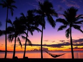 Обои Фиджи: Пальмы, Закат, Дерево, Ель, Frosty tree, Иголки, Фиджи, Гамак, Деревья