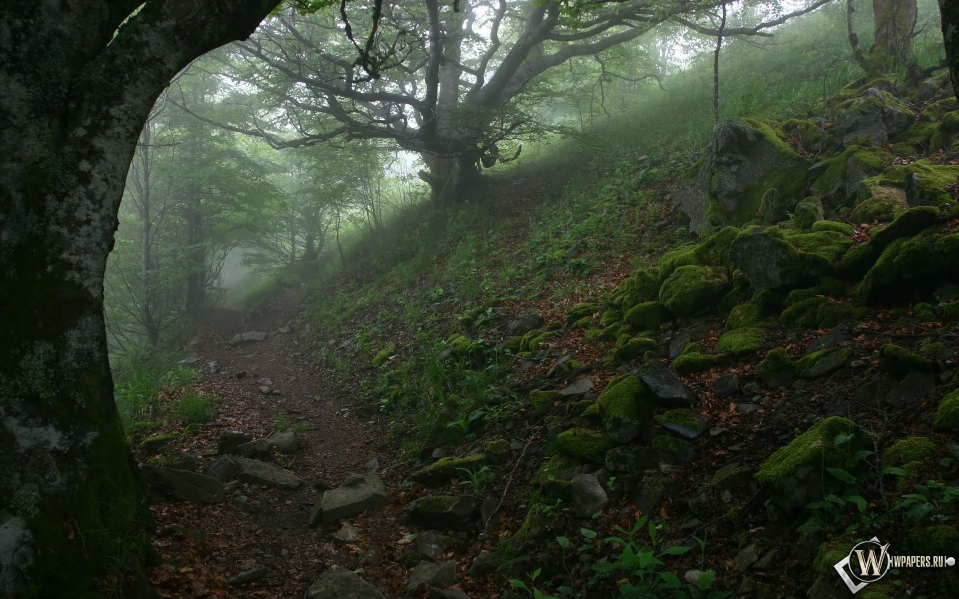 Тропа в лесу 1920x1200