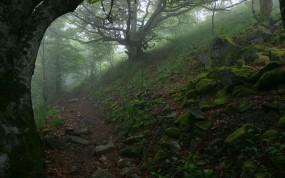 Обои Тропа в лесу: Деревья, Туман, Камни, Тропа, Деревья