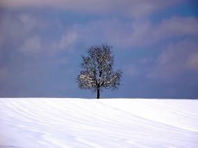 Обои Дерево: Зима, Снег, Дерево, Деревья