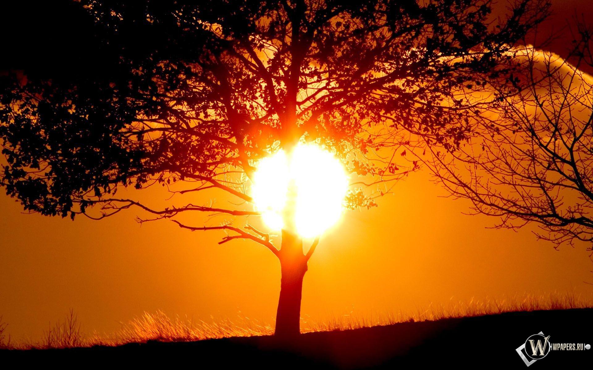 Солнце за деревом 1920x1200